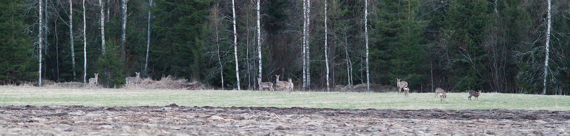 Kauhajoen metsästys Erja Pekkala