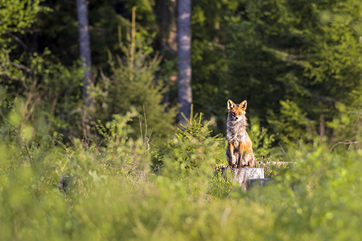 jäseneksi metsästysseuraan